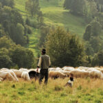 Alle Schäfchen im Blick: Community Management im B2B