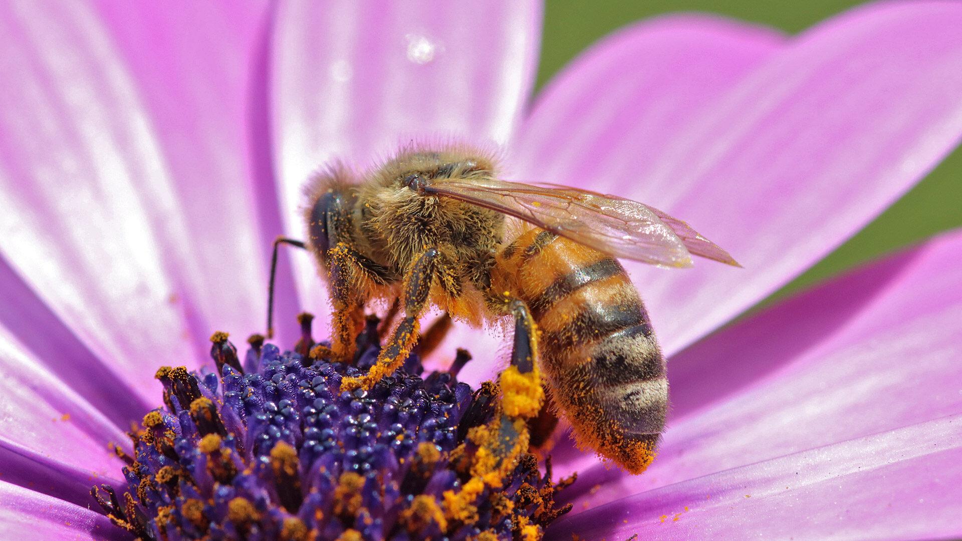 Analogie Data-Driven Marketing: Bienen sammeln statt Daten Nektar (Primärdaten) und gleichzeitig Pollen (Sekundärdaten)