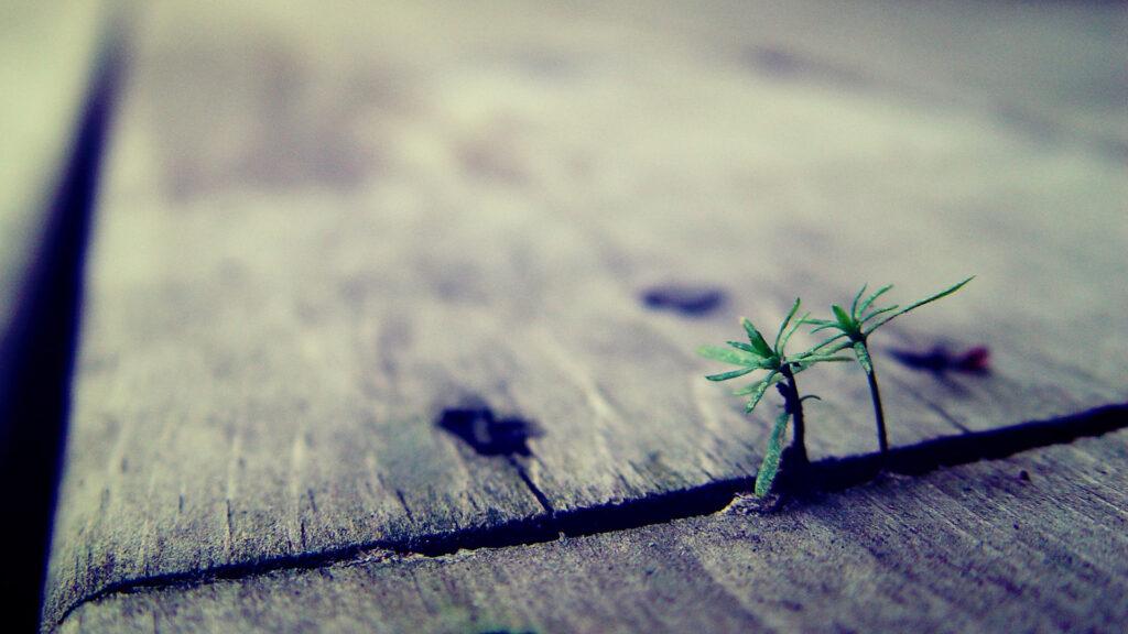 Wachstum braucht Zeit – gerade bei der Einführung neuer Methoden, wie Agile Marketing
