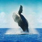 Krafvoll wie ein springender Wal: Der Blaue Ozean als Strategie für Einzigartigkeit